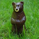 Chocolate Tofino Bear