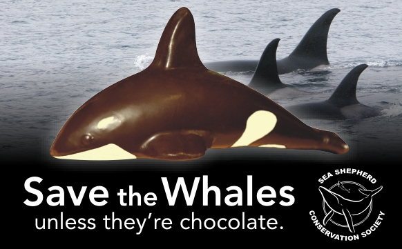 Chocolate Killer Whales