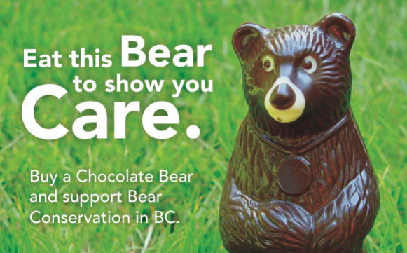 Buy a Chocolate Bear!