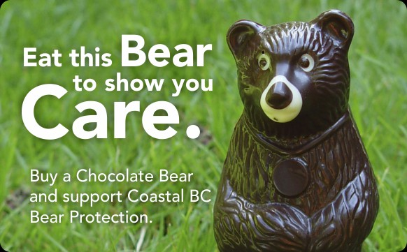 chocolate-tofino-tofino-bear